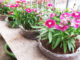 Recycle Waste, Plant Flowers In Plastic Bags For Your Balcony And Small Garden