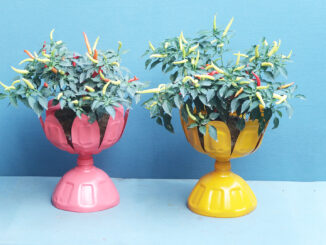 Creative Potted Plant Ideas From Discarded Plastic Bottles