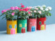 Recycle The Milk Bottle To Make A Beautiful Home Garden