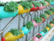 How to grow sprouts on the balcony in recycled plastic bottles