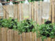 How to grow mint easily at home, Beautiful hanging mint garden