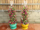 Beautiful Portulaca (Mossrose) garden tower from recycled plastic bottles
