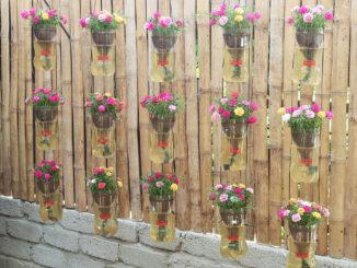 Creative hanging garden automatic watering plant Portulaca (Mossrose)