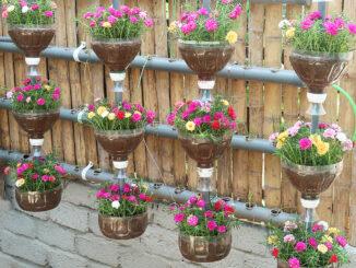 DIY hanging garden automatic watering plant beautiful Portulaca (Mossrose)