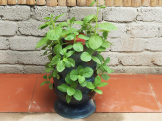 Ideas for growing vegetables to save space   Recycle plastic bottles to grow spinach at home