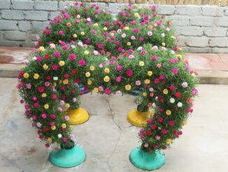 Beautiful heart hanging garden ideas growing Portulaca (Mossrose)