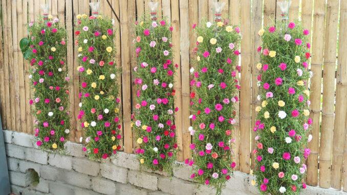 Beautiful DIY vertical hanging garden growing Portulaca (Mossrose) for small spaces