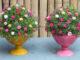 Creative ideas for beautiful Portulaca (Mossrose) flower pots