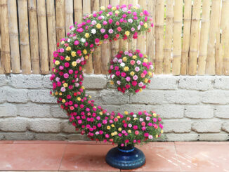 Garden of the globe blooms - the idea of greening the earth with flowers Portulaca (Mossrose)