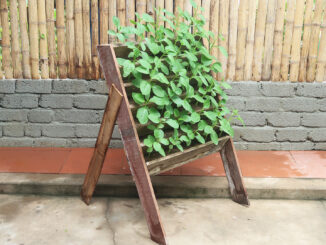 Instructions for vertical gardening to grow spinach at home