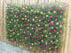 Wall garden idea growing beautiful Portulaca (Mossrose) from plastic bottles