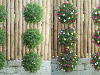DIY hanging garden with beautiful Portulaca (Mossrose) flower globe