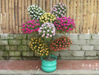 Creative flower garden, beautiful plastic bottle garden ideas for the garden