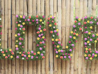 Creative love flower garden, Creative garden ideas for old wall